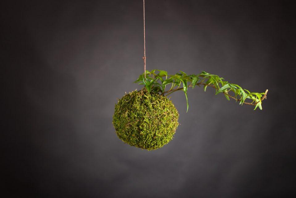 ... DIY: Kokedama String Garden ...