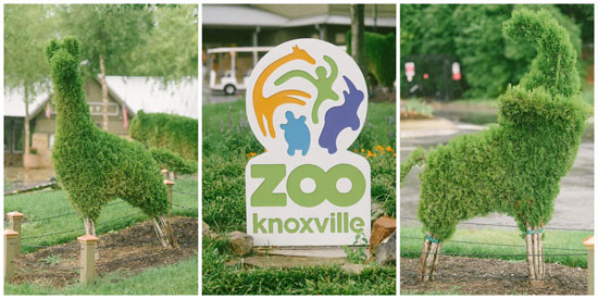 knoxville_zoo
